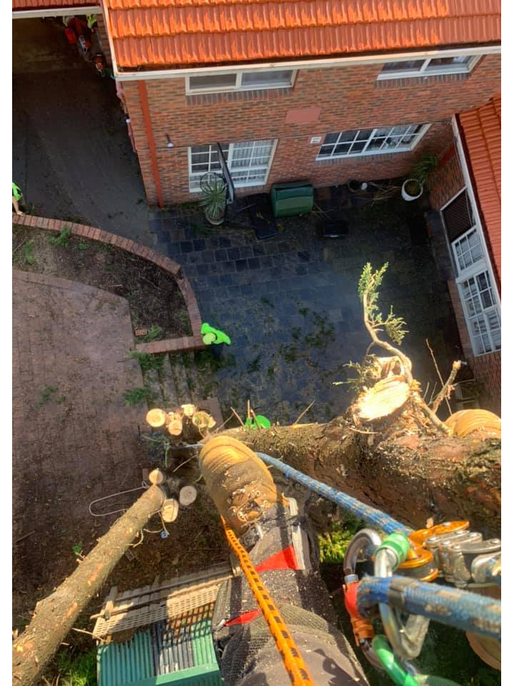 The Tree Trimmers - Big Pine Tree Removal - Eddie - Glen Waverley - tree over roof.png