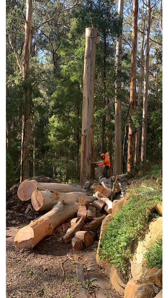 The Tree Trimmers - Large Eucalypt Tree Removal - Fire Wood - Eddie - Selby.png