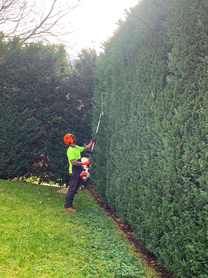 the+tree+trimmers+-+hedge+trimming+-+st+kilda+-+perfect+hedge.jpg