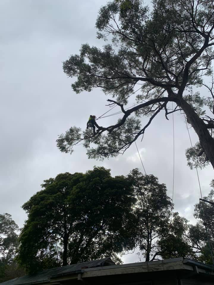 the tree trimmers - branch removal over roof - upwey - emergency job.jpg