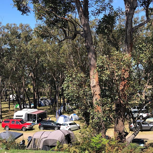 Campers setting up under the trees 🌳🏕 🎶☀️