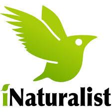 Reimagine iNaturalist