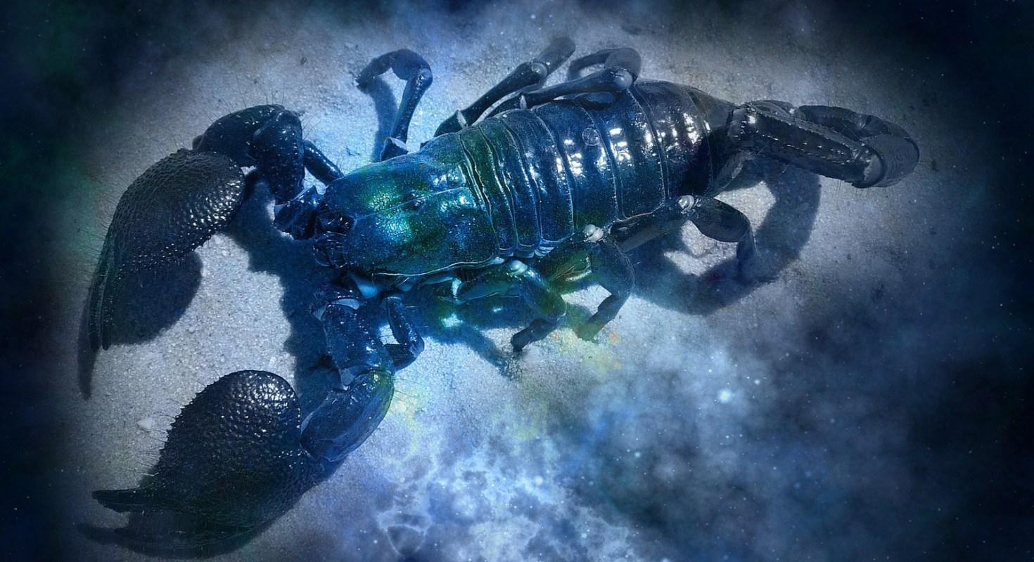 Scorpio Love and Sex Astrology.jpg