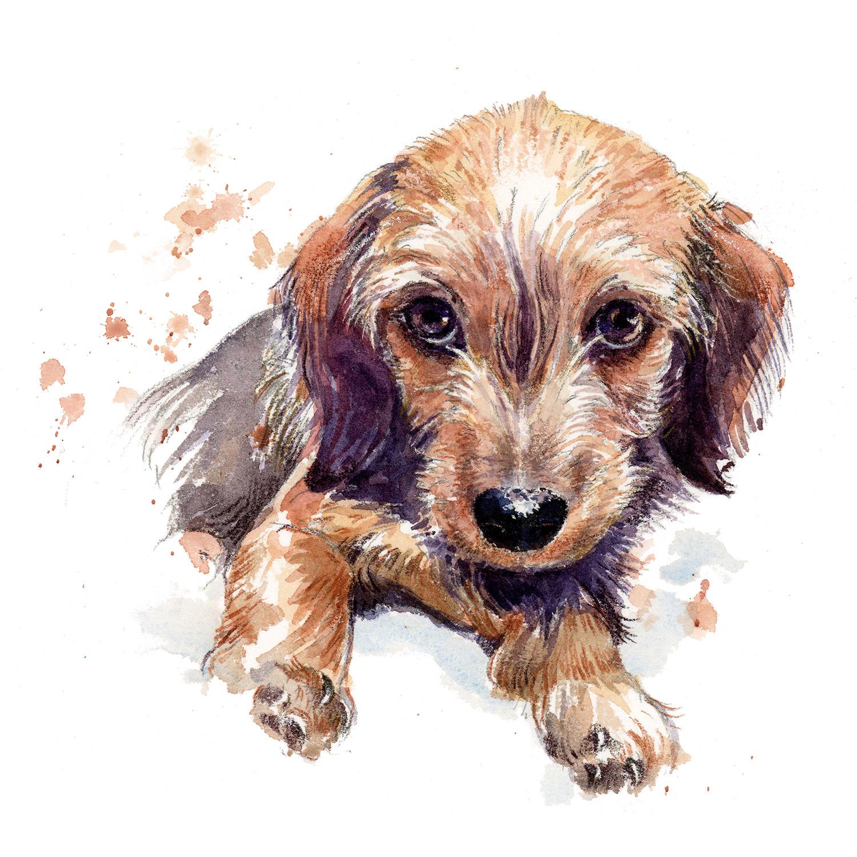 Daschund puppy portrait
