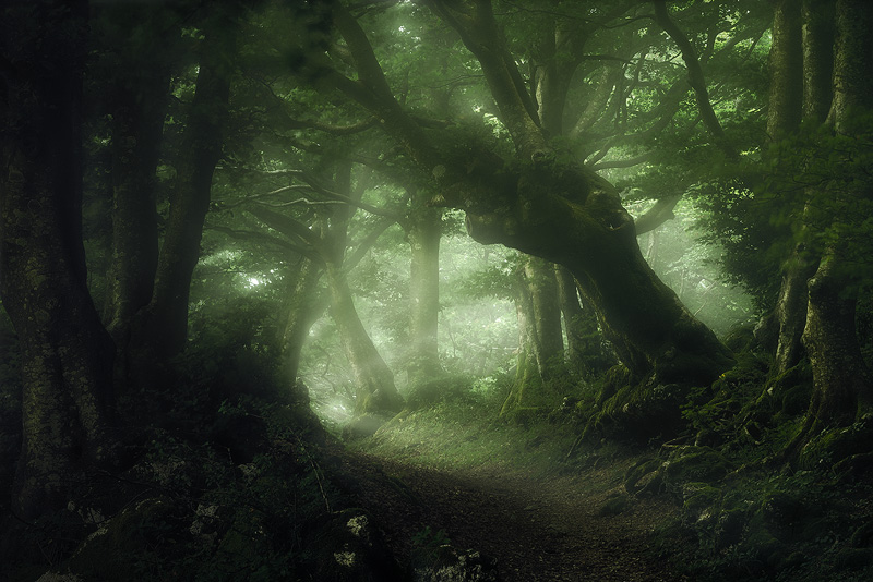 Whisperwood - The Orton Effect works very well in woodland images.  Especially so in misty conditions such as here at Monte Cucco in Italy..