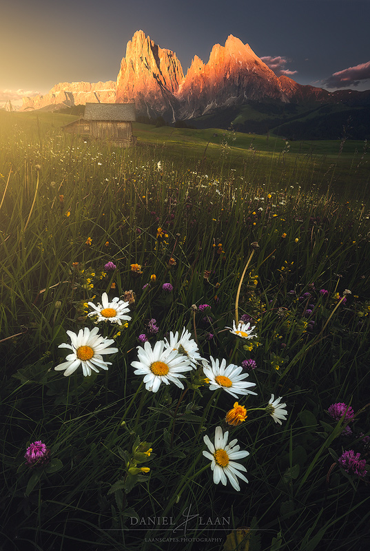Golden Meadow - I used soft glow in this image to emphasize the  direction of natural light and the setting sun to create more impact.