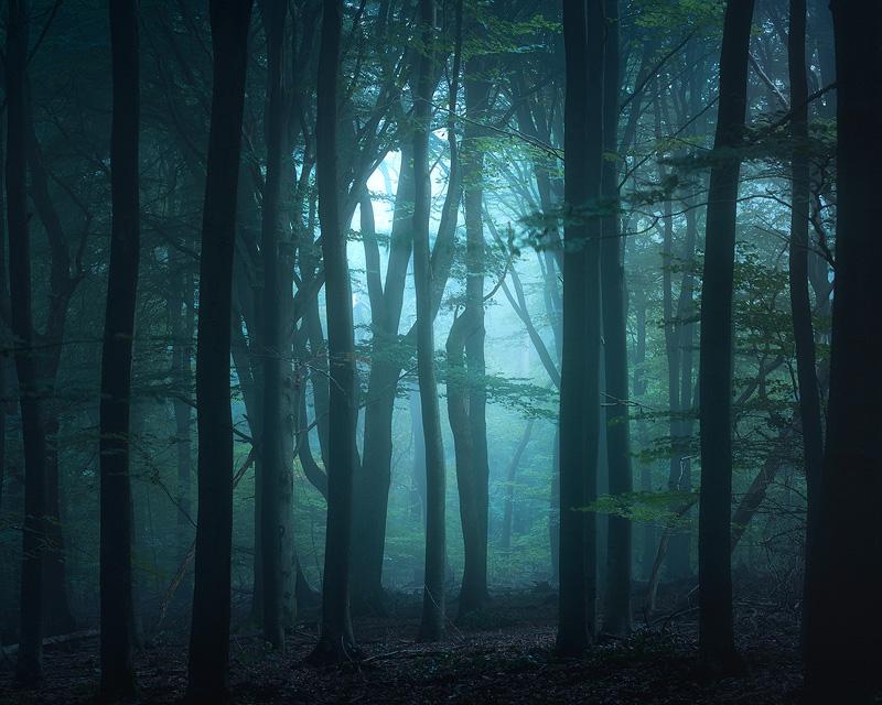 Workshop Bosfotografie - Welkom in het mooiste bos van Nederland