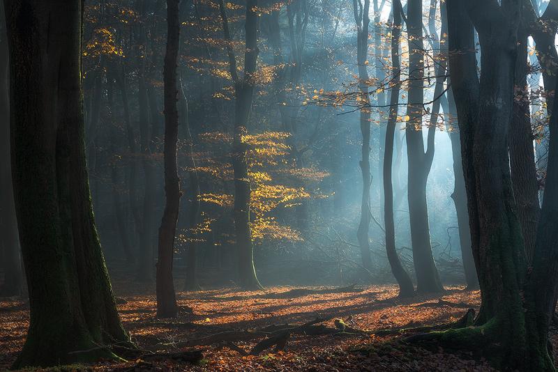 Shimmering-Grove.jpg