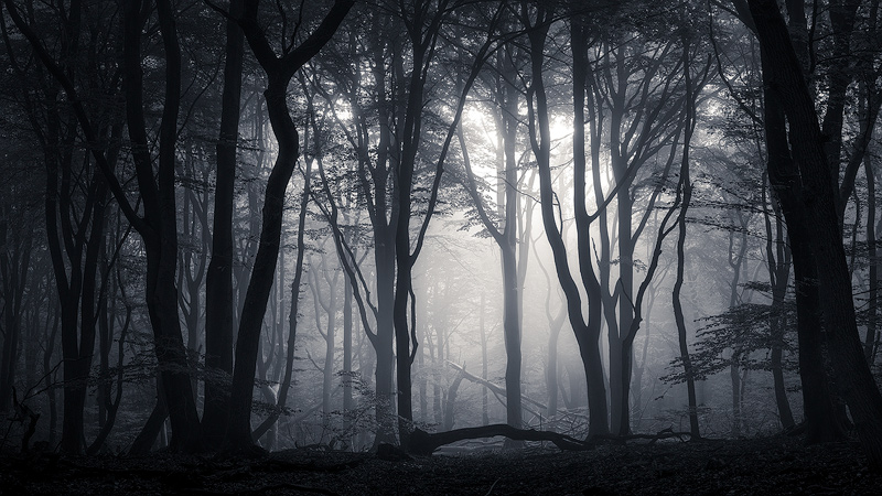 The Dark Forest Double Workshop - 2 Mornings in the Mysterious Dutch Forests