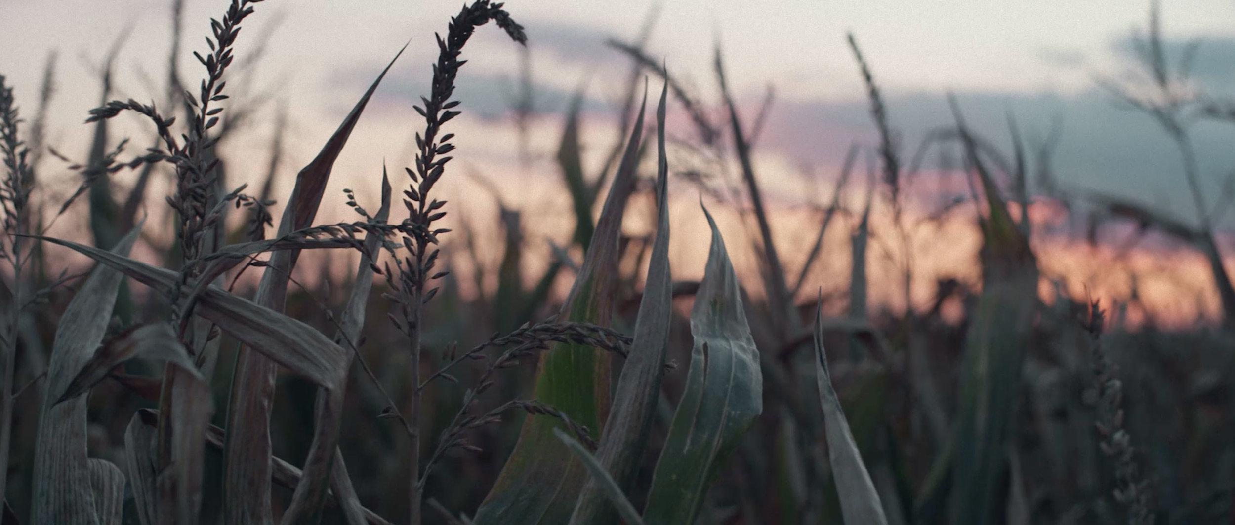DLG-Ready-Landwirtschaft-Prüfung-Sicherheit-Digital-Technik-Traktor_03.jpg