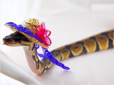 snake hat 2.jpg
