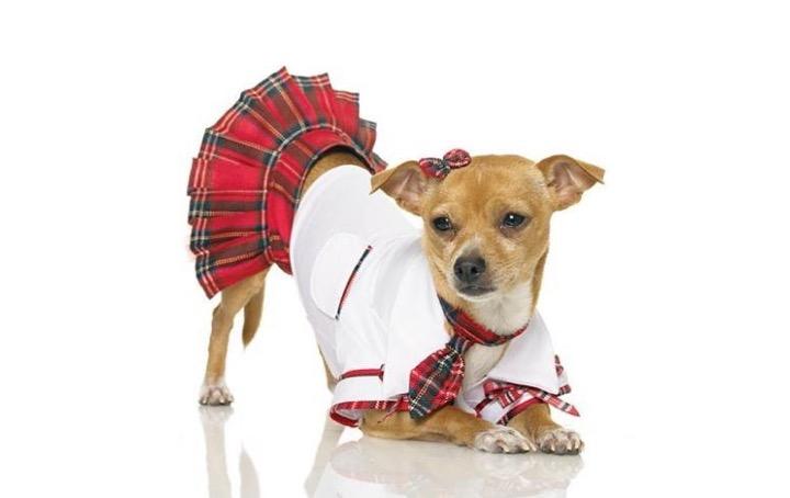 Dog fashion.jpg