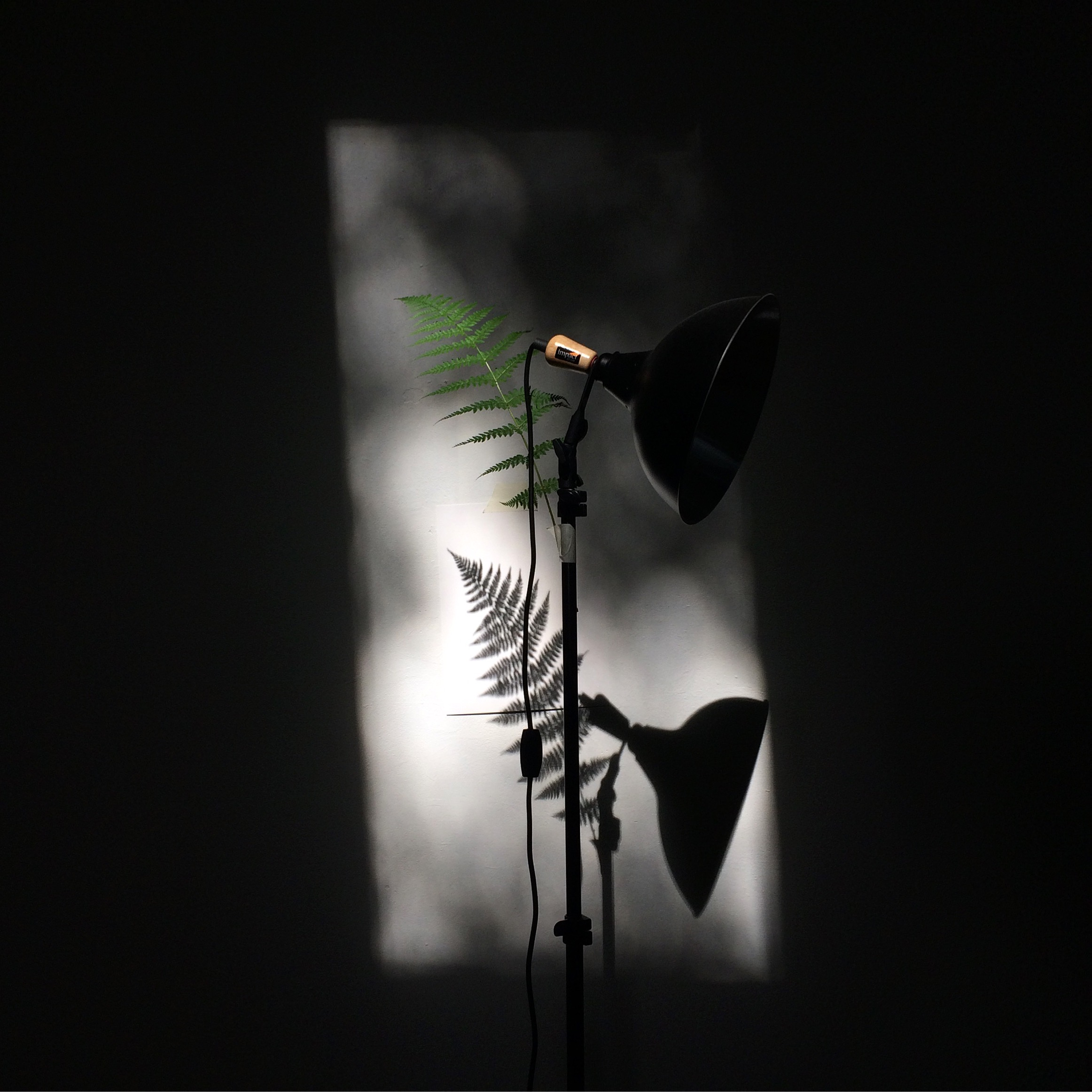 - Fern / Sun Dial is an ongoing project wherein a frond's shadow in painted repeatedly, on the hour, as the sun moves through a window.
