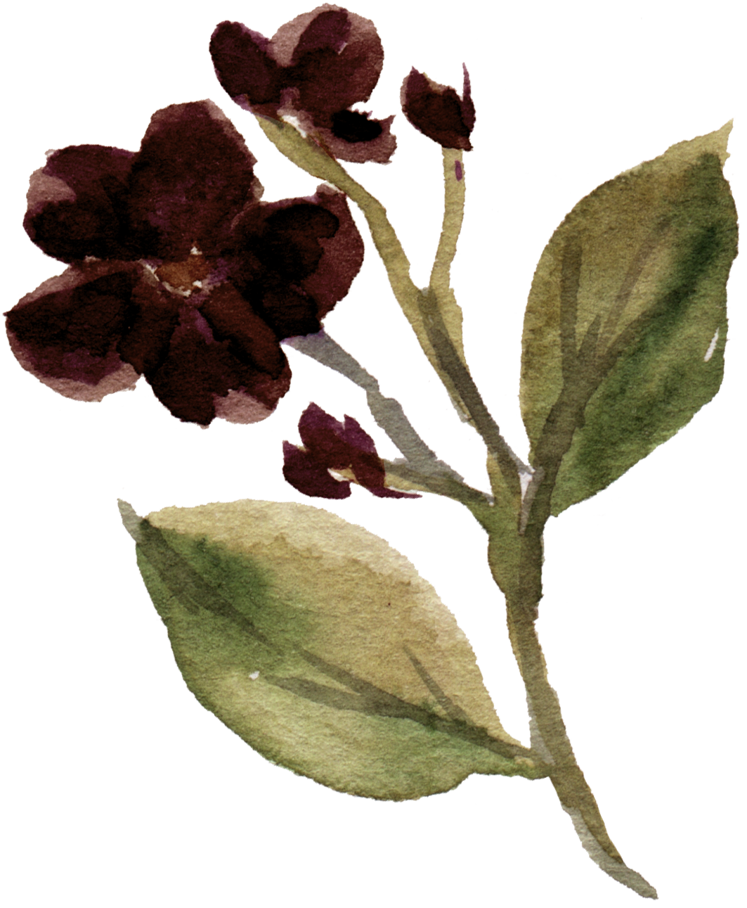flower 13.png