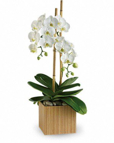 Orchid 2 - $125.00