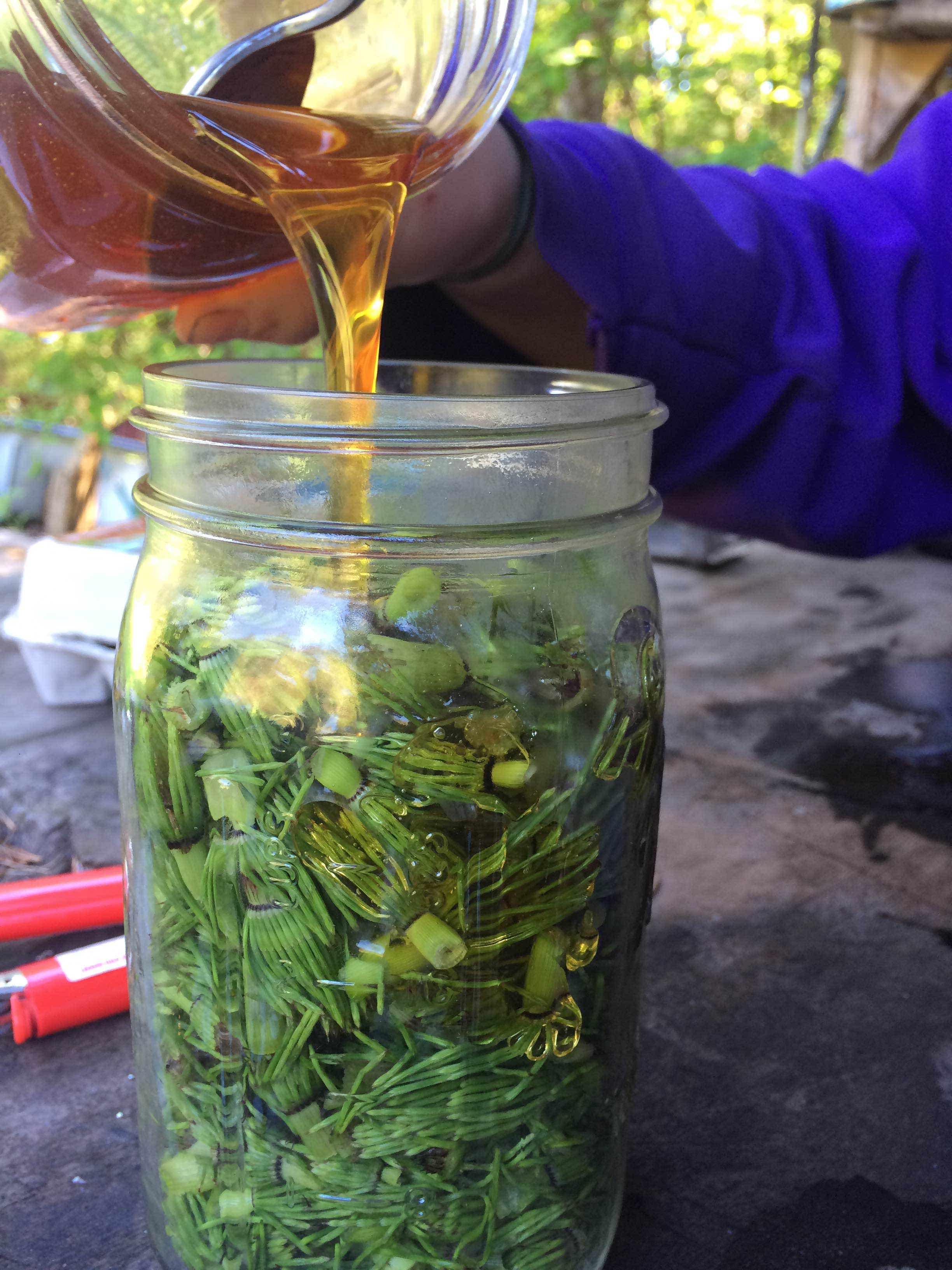 Horsetail Honey