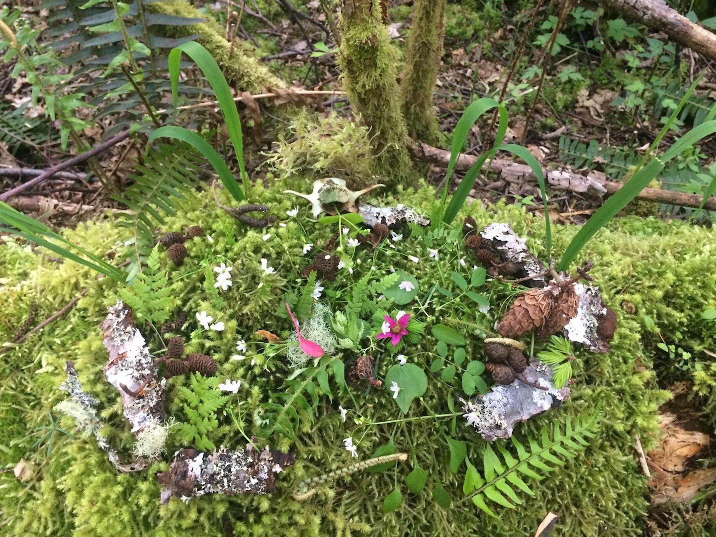 Mandala of the Woods