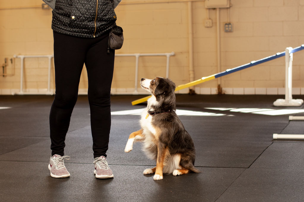 All-About-Dogs-Training-Grass-Valley-1.jpg