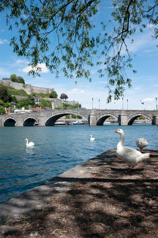 Namur_1MOIS_1VILLE_Vue de Jambes 6.jpg