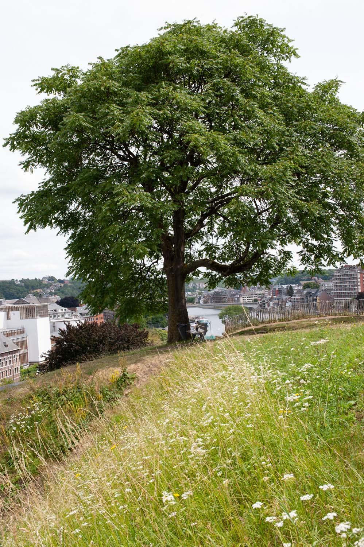 Namur_1MOIS_1VILLE_Citadelle 5.jpg