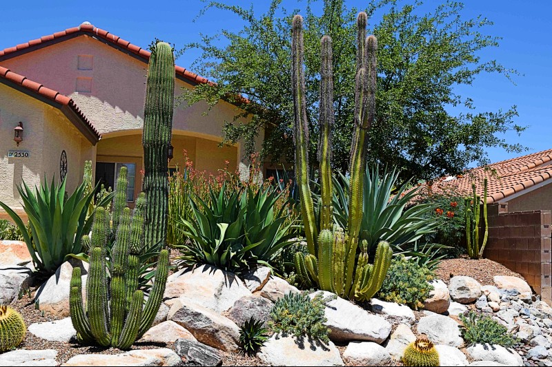Our Landscape Cleaning Business - We have been in business since 2001 and have served thousands of happy customers in Tucson, The Catalina Foothills, Oro Valley and Marana.