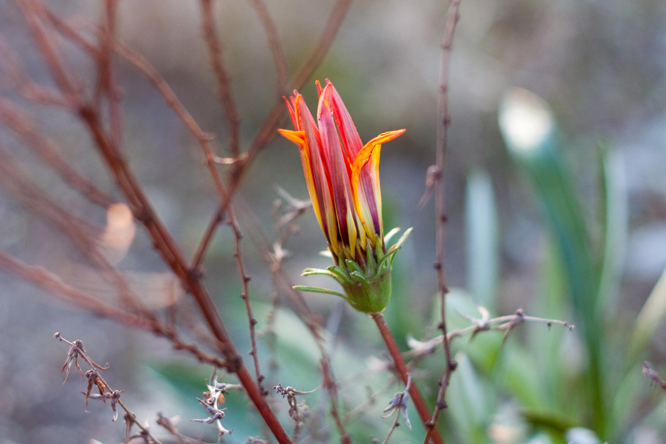 sdwildflower.jpg