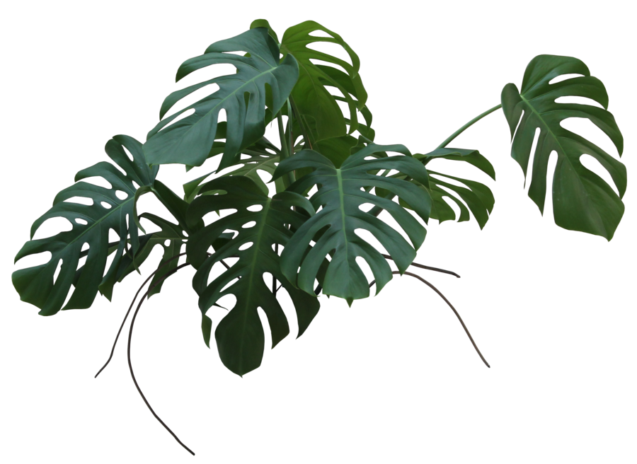 leaves 3.png