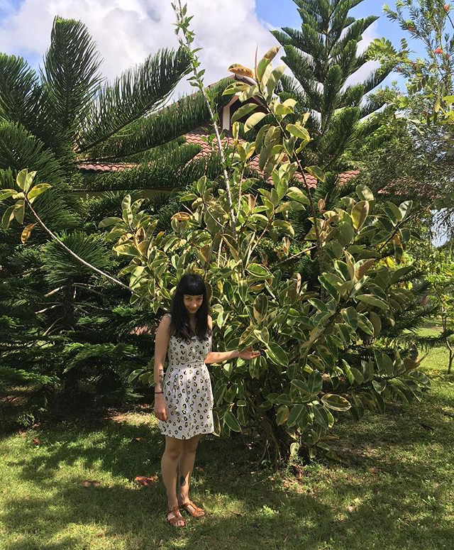 Emma and a HUGE  Ficus elastica  in Thailand