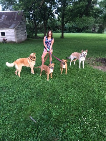 Me with my resident dog and 3 foster pups.