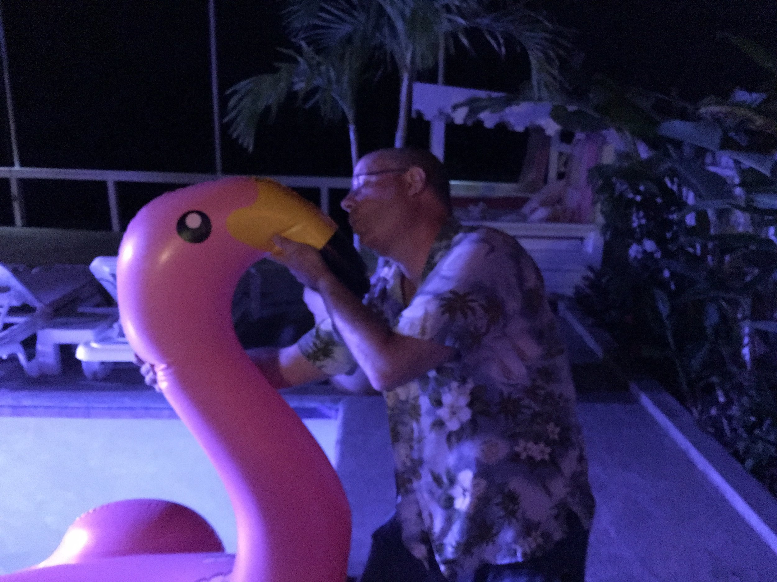Flamingos are Bonaire's bird, so I figured I should pay my respects...
