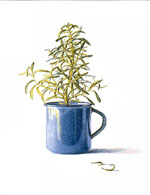 Rosemary's Cup