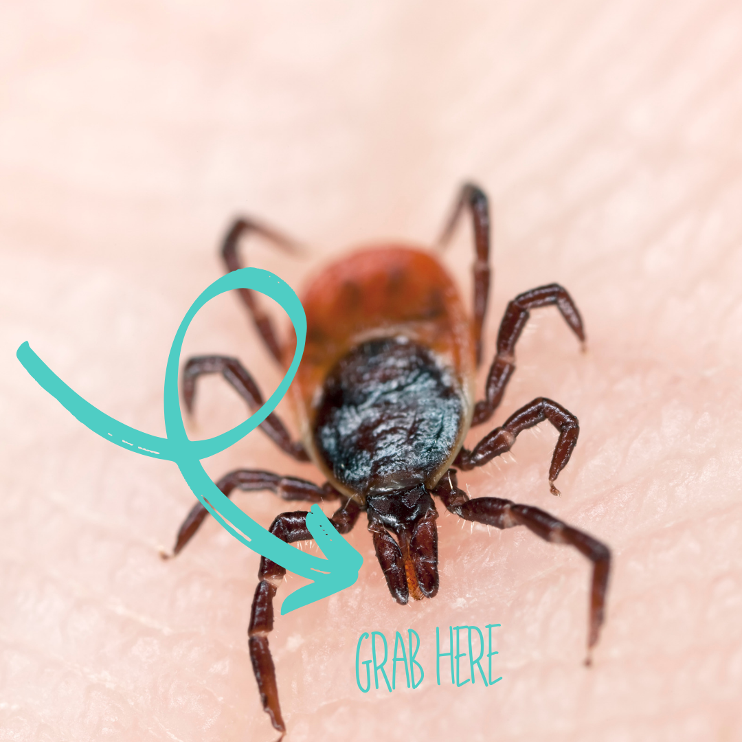 PJ Harlow Wellness — Tick Bites, Lyme and the Disease Divided