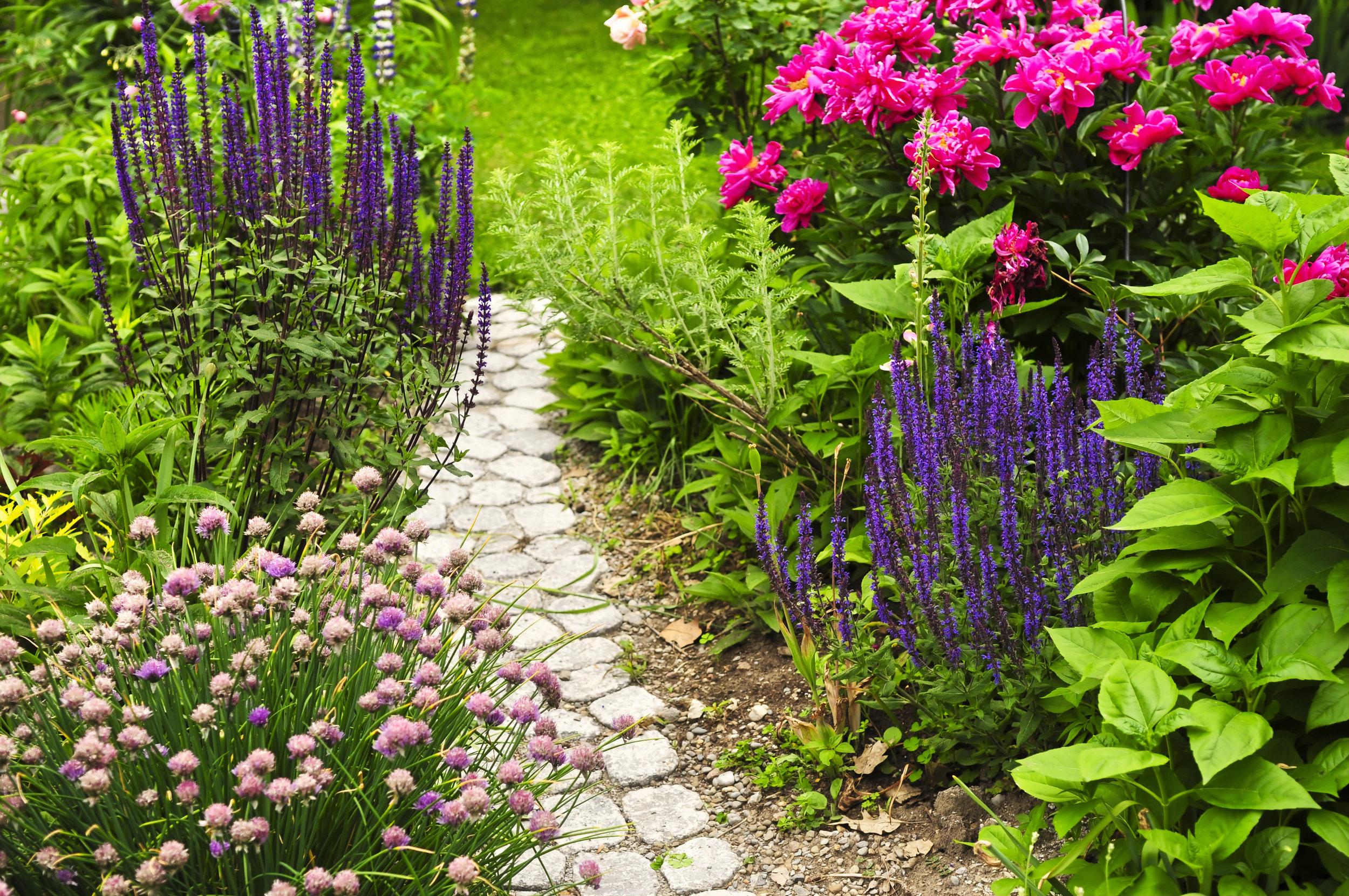 Enviroscapes Grounds Management | Atlanta's Premier Flower Landscape Company | Chive, Flowering, Nature, Plant, Garden, Flower, Purple