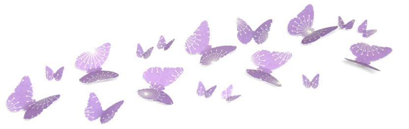 butterflies banner image.jpg