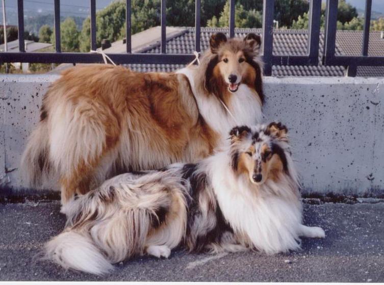 Bonnie og Bellla.jpg