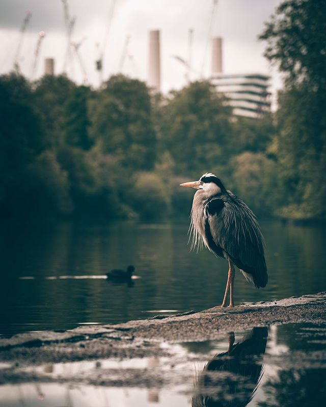 "Man vs nature.. sadly.. 🦆 have you watched ""Our Planet"" on Netflix? If not, watch it now! 👀 . . . . . #all2epic #alphacollective #serialshooters #createexplore #cc5k #sonyalpha #moodygrams #eclectic_shotz #depthdiscovered #streets_vision #theimaged #acreativevisual #visualambassadors #gramslayers #depthobsessed #creativeoptic #fatalframes #roamtheplanet #unknownperspectives #dof_addicts #way2ill #ourmoodydays #shotzdelight #bokeh_shotz #folkscenery #illgrammers #folkcreative #thefolkpr0ject #trappingtones #livefolk"
