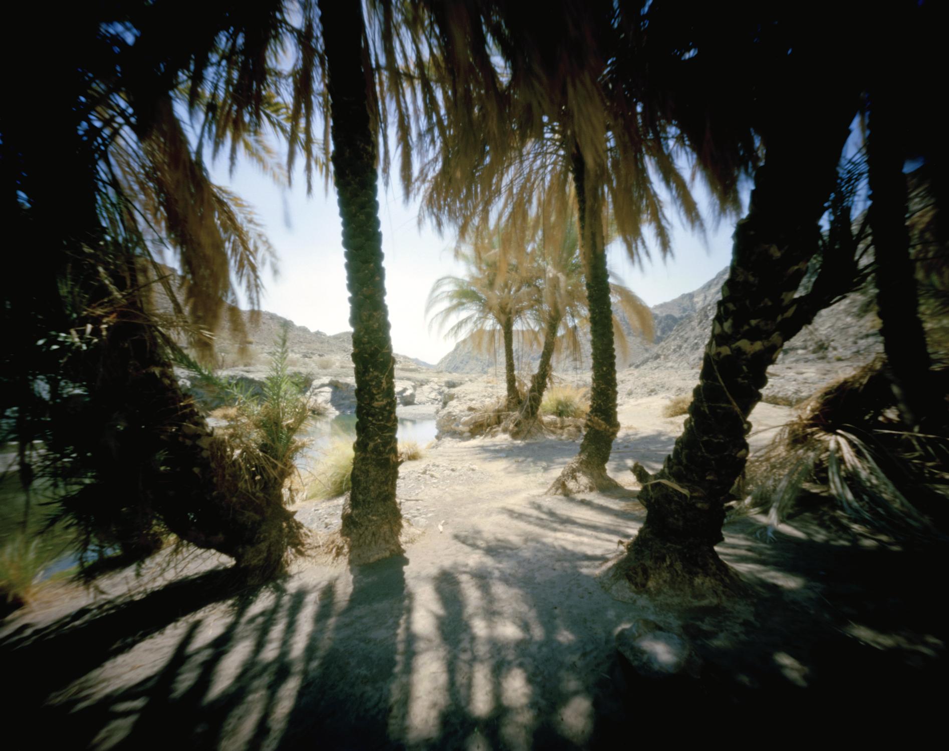 Oasis in Oman