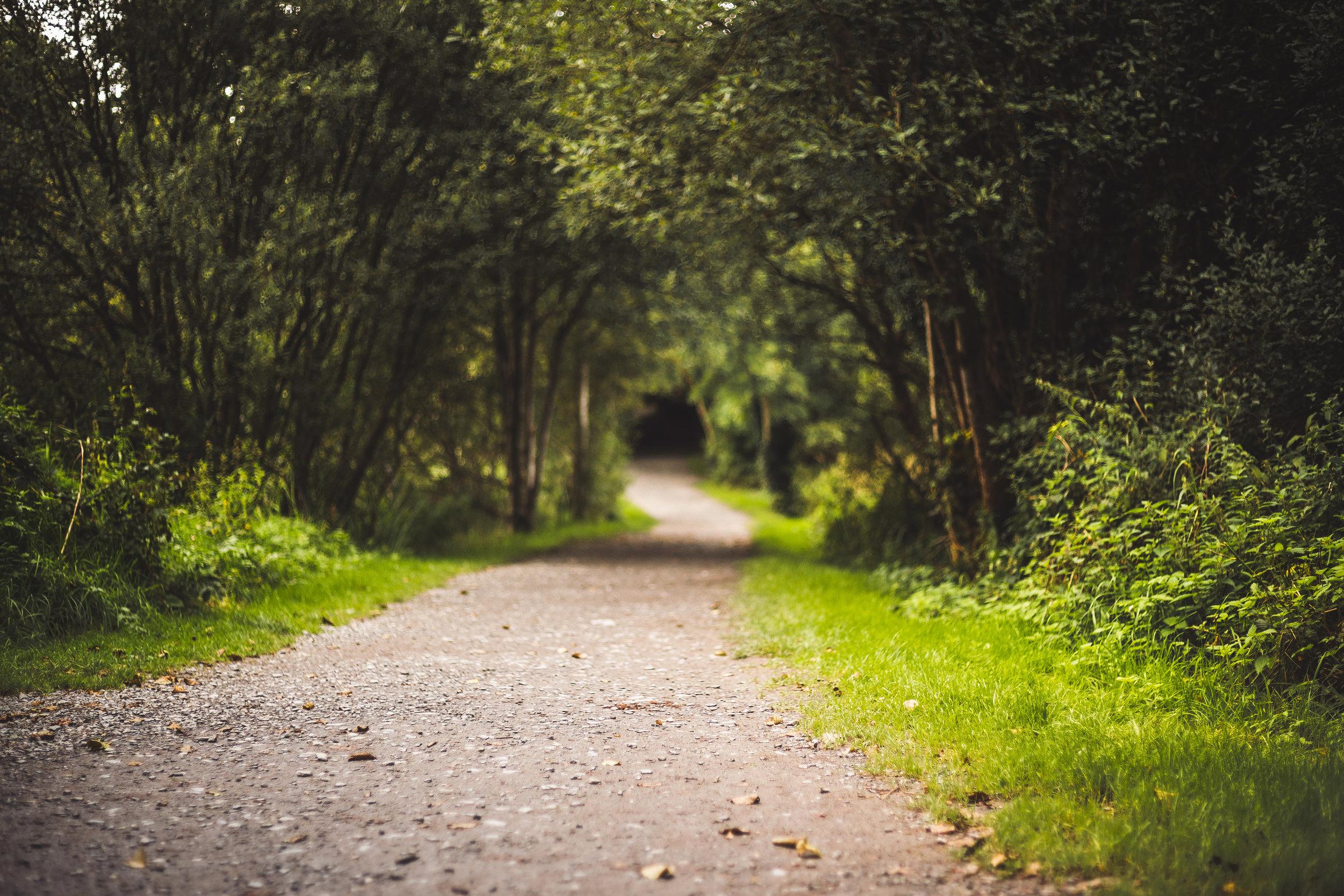 Avon Ri - Forest Trail-04.jpg