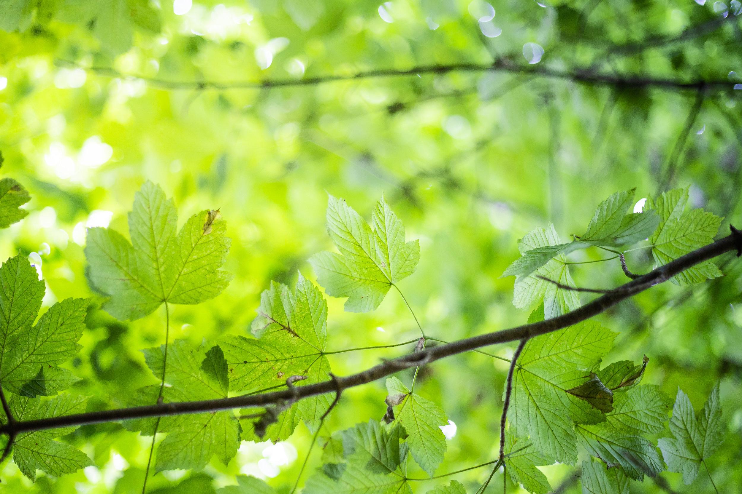 Avon Ri - Forest Trail-01.jpg