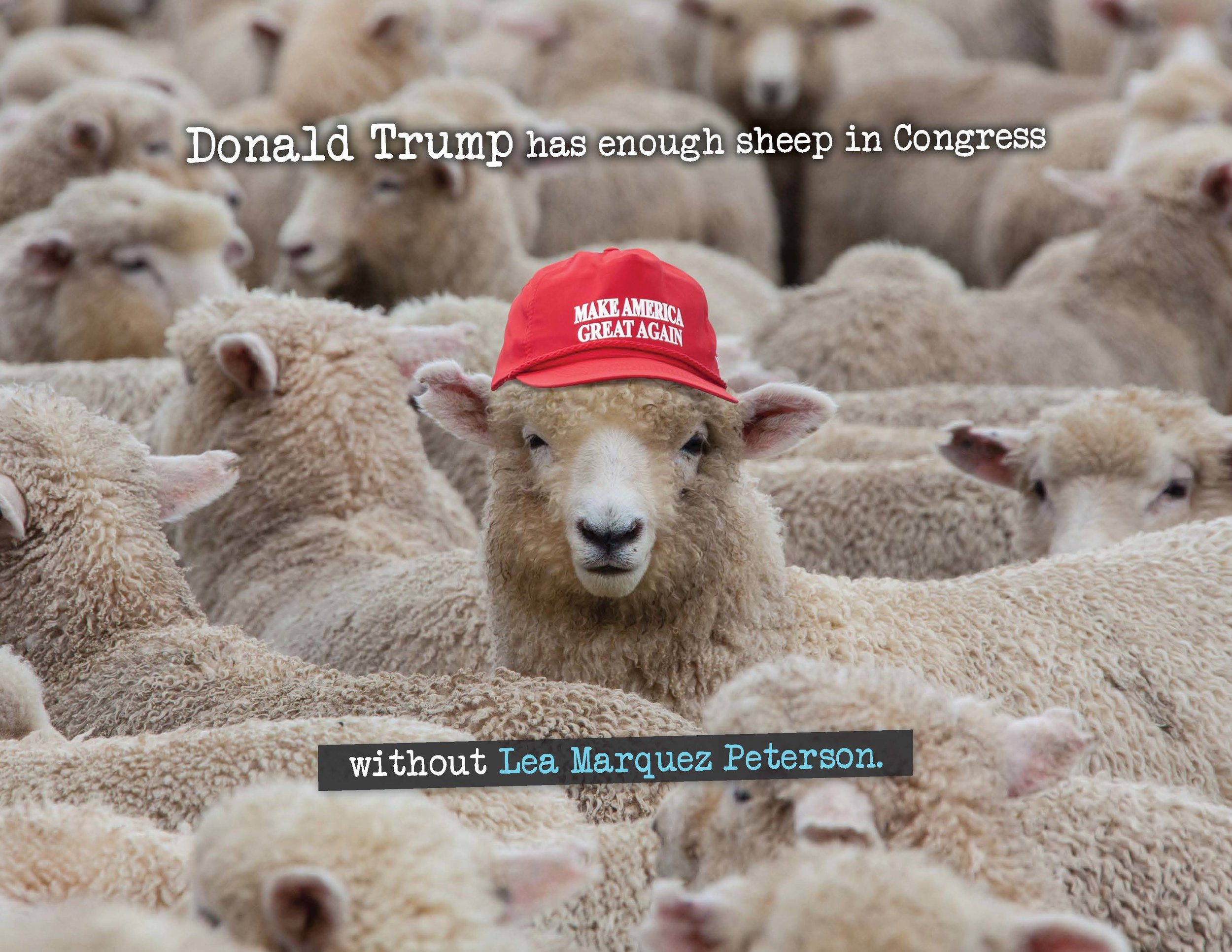 Kirkpatrick - Sheep MC18_Page_1.jpg