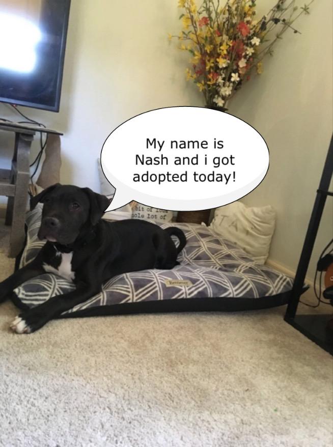 nash!.jpg