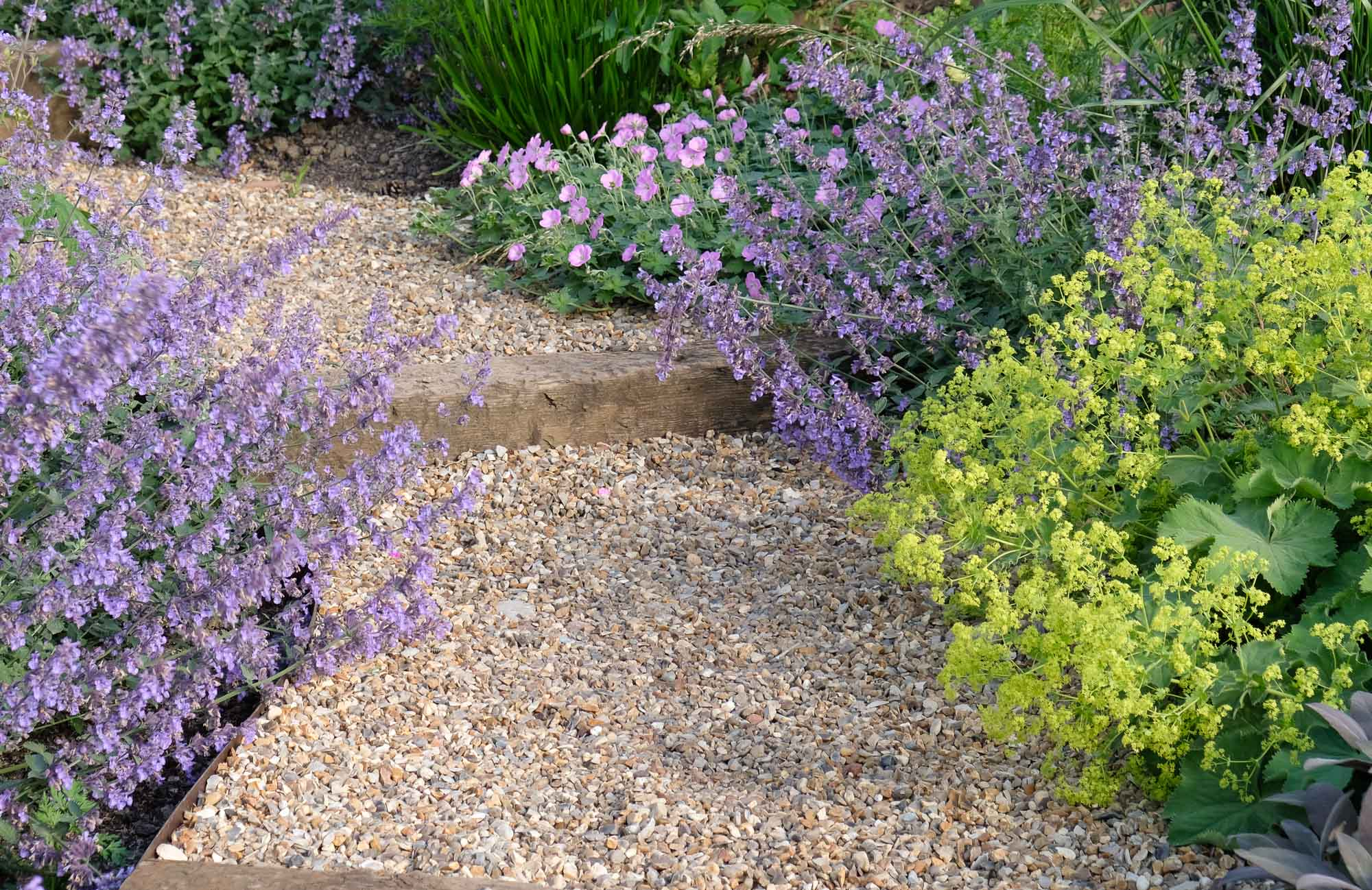Catmint and alchemilla make a soft, cottagey accompaniment to this gravel path