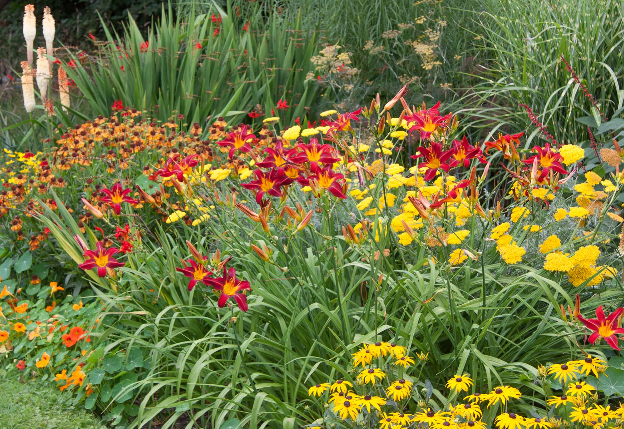 Bold colours of Rudbeckia, Hemerocallis, Achillea and Helenium in a 'Hot Bed'