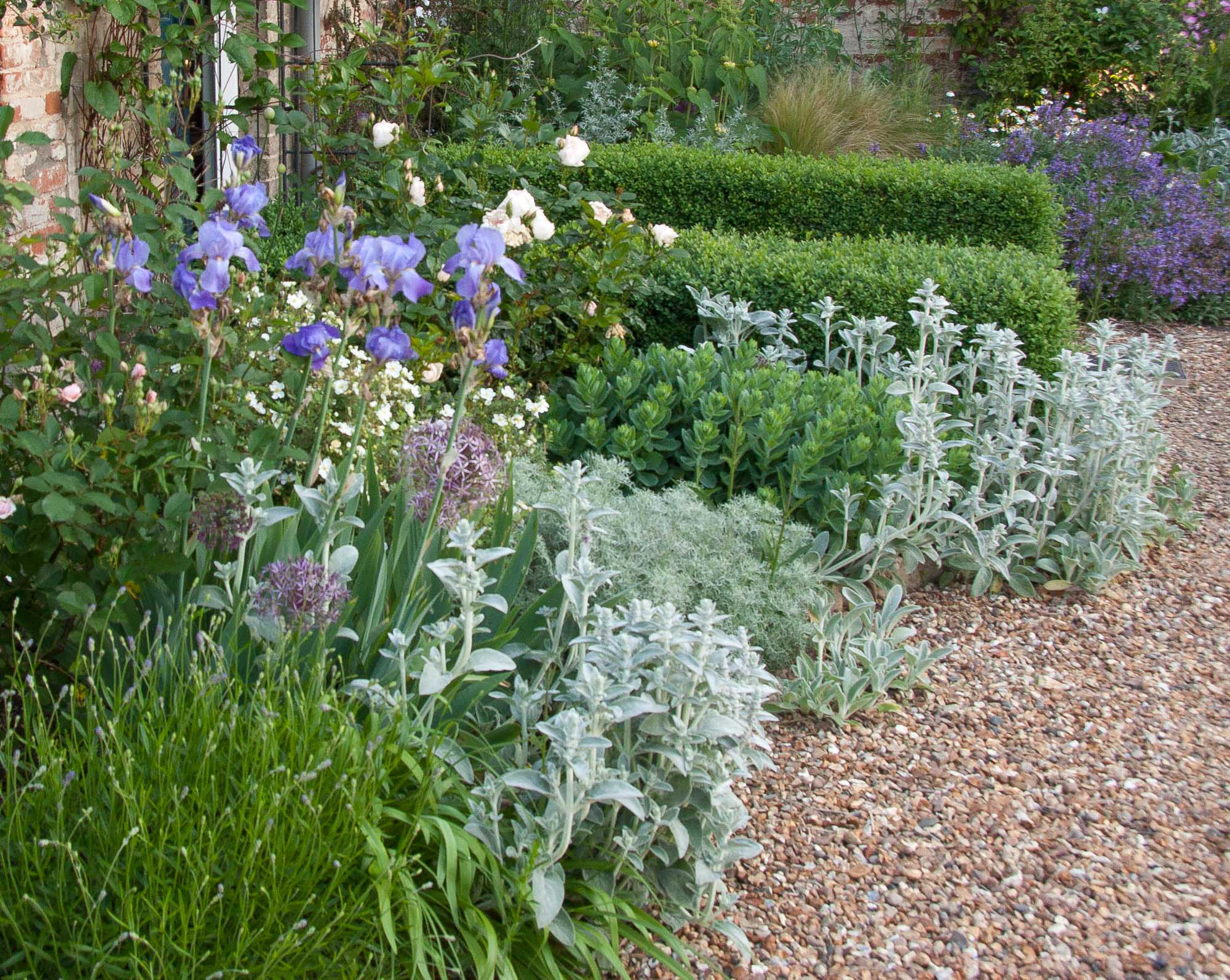In early Summer, Iris and Alliums provide interesting shapes and toning colour against a background of th silvery foliage of Stachys and Artemisia