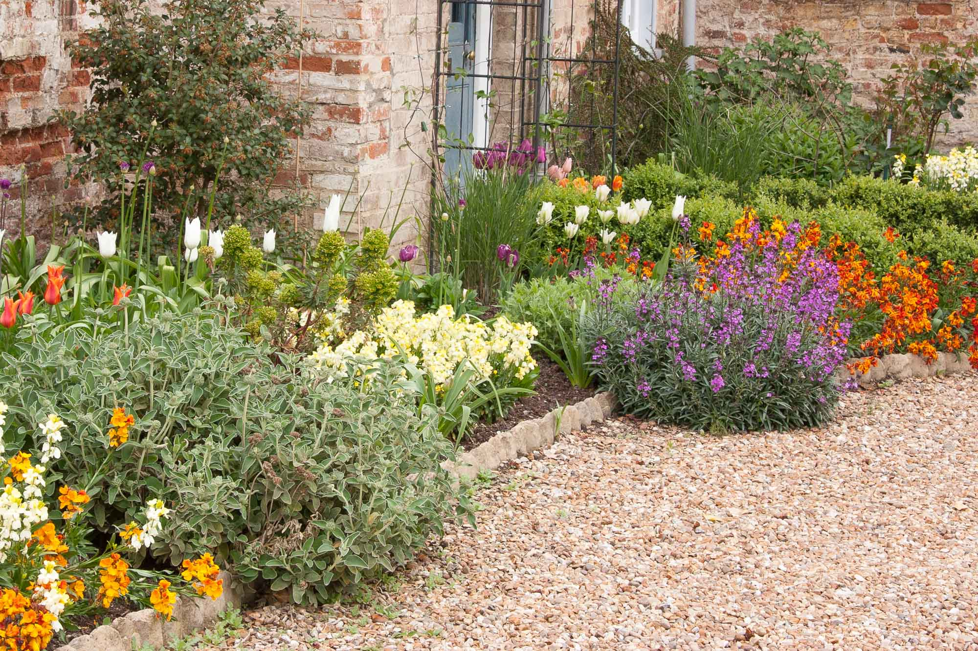 Spring colour in this mixed border is provided by tulips and wallflowers, set off by the silvery foliage of Phlomis and the lime-green of Euphorbia.