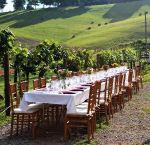 Enjoy a gourmet wine paired dinner amongst the vines