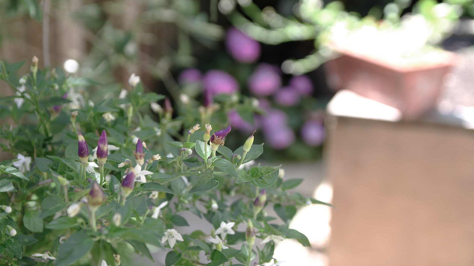 Project-8-flowers.jpg
