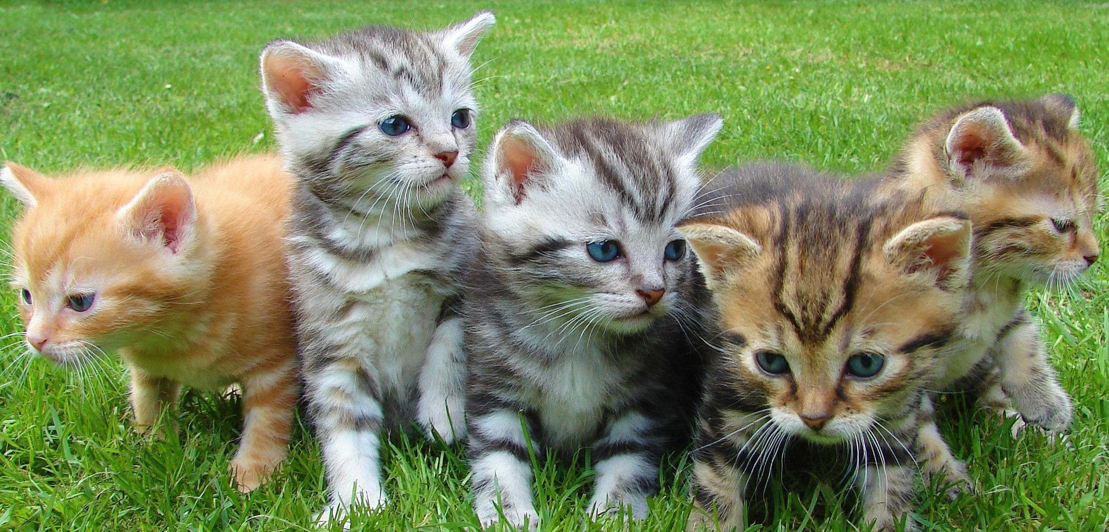 Kittens Cropped.jpg