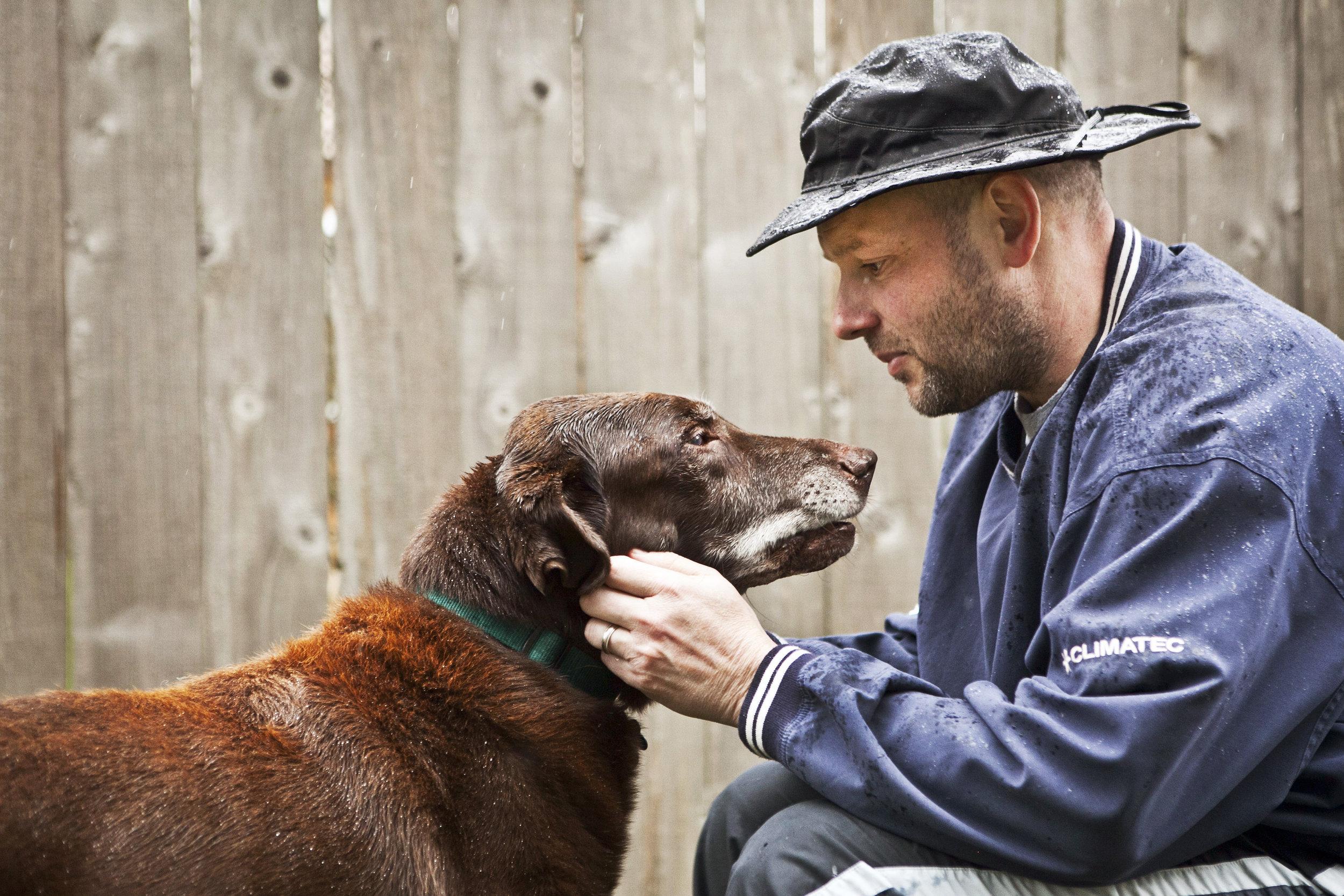 julie-austin-pet-photography-labrador-chocolate.jpg