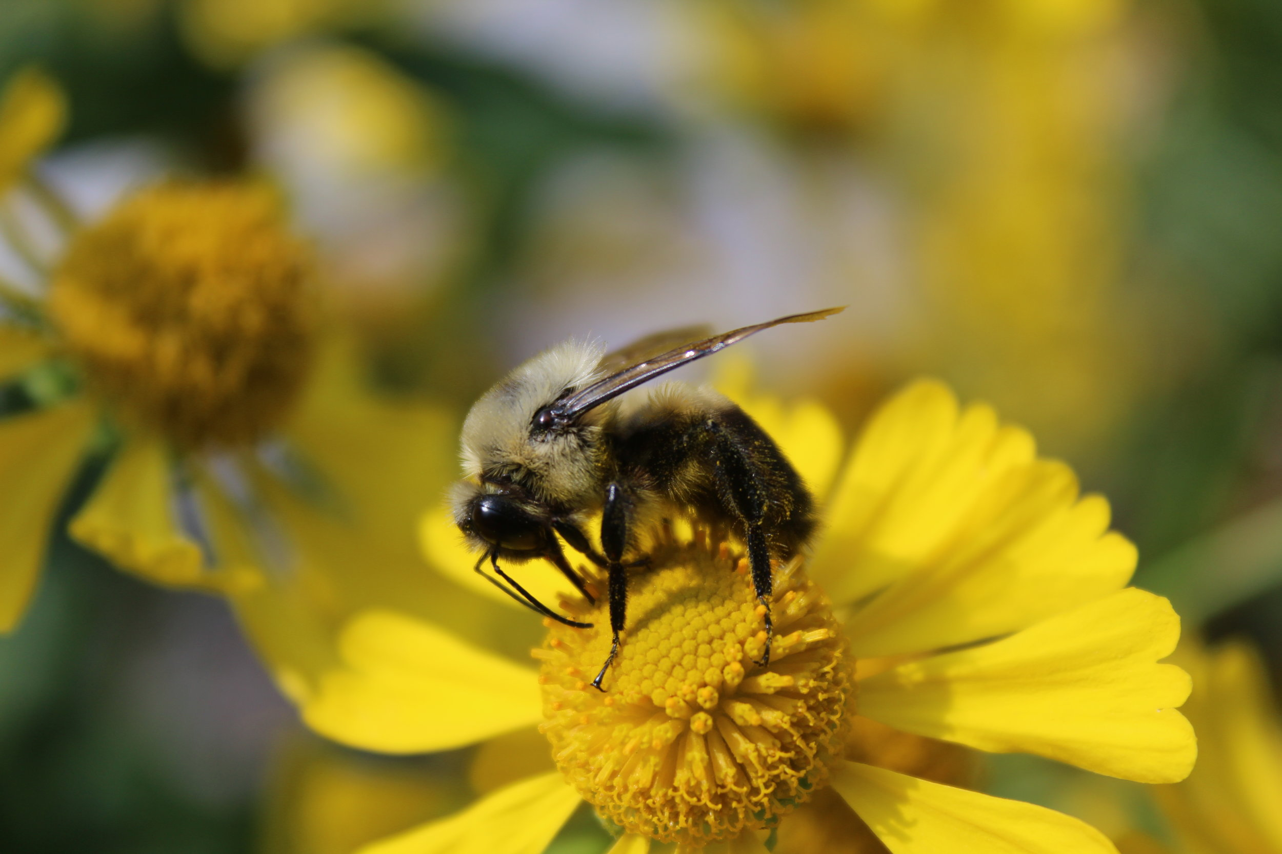 Our commitment to the Pollinators - Evergreen partnered with BeeKind MN this year to help raise awareness, build hives, and educate the Twin Cities community on the impact our local pollinators have our our wild vegetation and crops